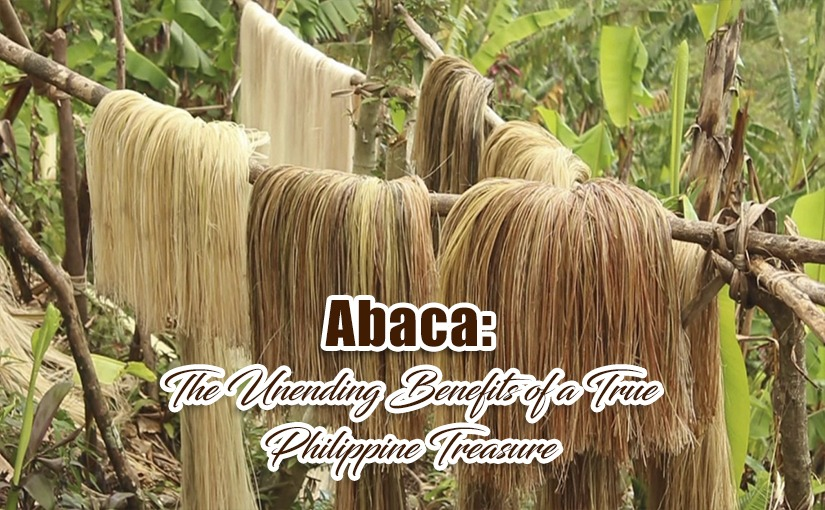 Abaca: The Unending Benefits of a True Philippine Treasure